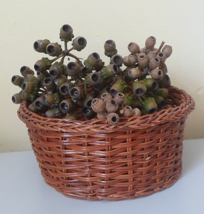 A small basket of gum nuts
