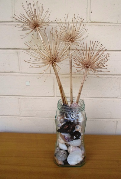 Dry Agapanthus Flower Heads In Jar