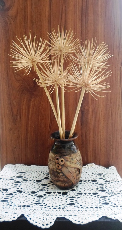 Dry Agapanthus Flower Heads