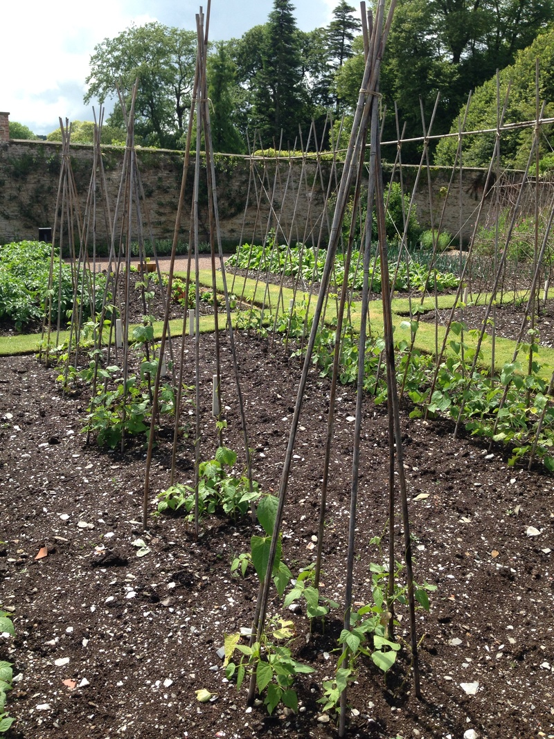 Peas and beans structures, pea canes, bean canes, beautiful vegetable gardens   - Stunning Vegetable Garden Ideas