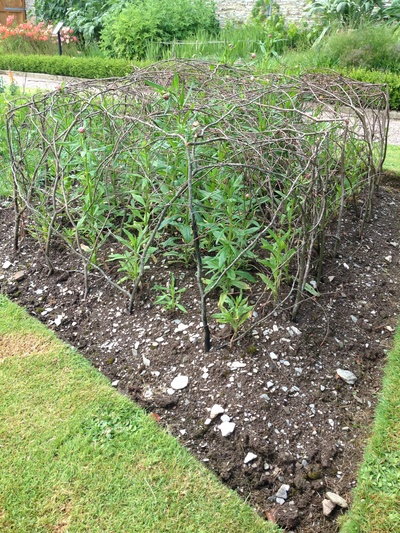 Peas and beans structures, pea canes, bean canes, beautiful vegetable gardens